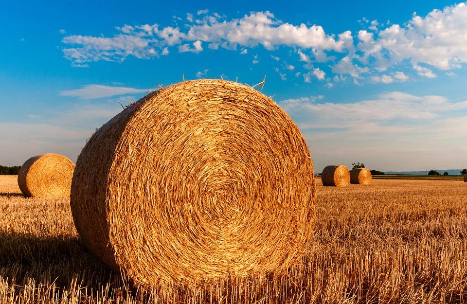 Село, сільське господарство